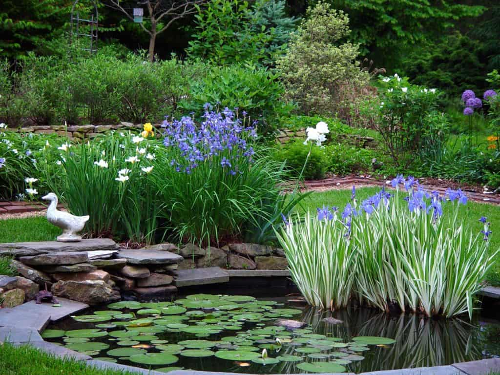 Garden pond in Waterford Virginia
