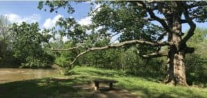 """Big John"" next to Catoctin Creek in Watefford Virginia"
